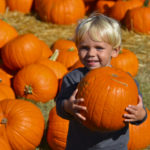 San Diego's top 5 perfect pumpkin patches