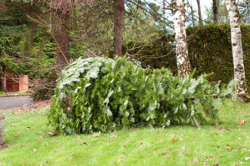 Ready To Recycle That Christmas Tree?